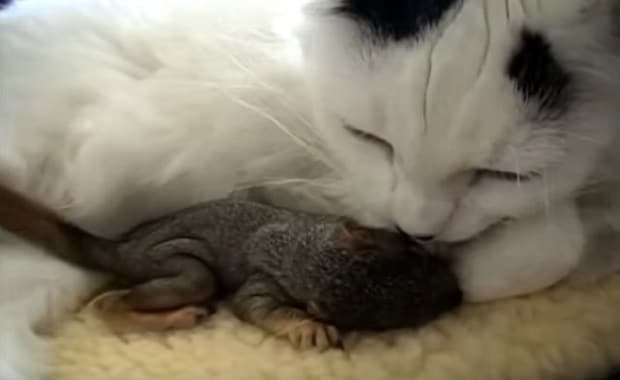 Cat Saves Baby Squirrels Found in Yard and Adopts Them - VIDEO