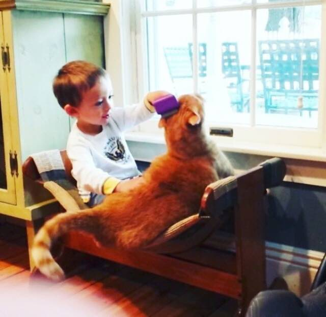 Once Unwanted Ginger Cat Becomes Guardian to Boy, His Human for Life! 6