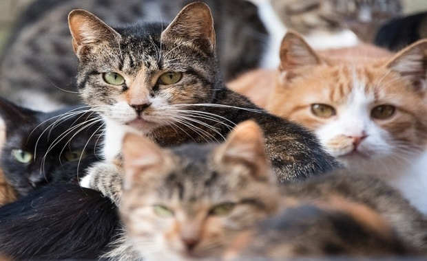 Why Do Cats Purr? The Truth Revealed!