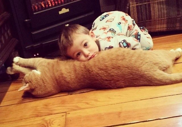 Once Unwanted Ginger Cat Becomes Guardian to Boy, His Human for Life! 2