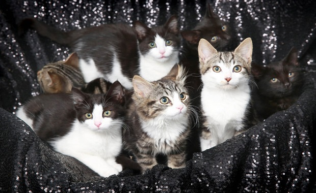 Kittens Dumped At London Animal Shelter Named After Star Wars Characters