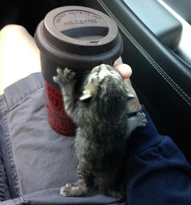 kitten-small