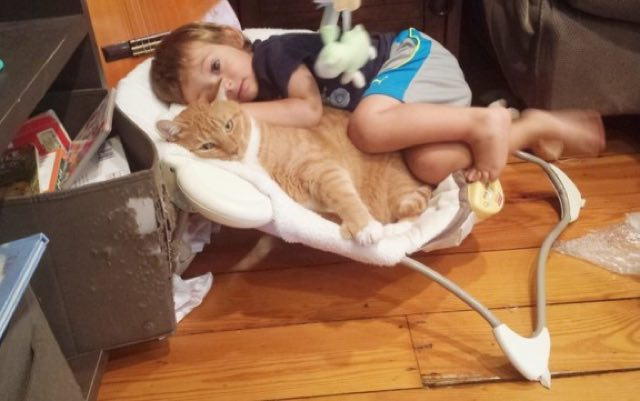 Once Unwanted Ginger Cat Becomes Guardian to Boy, His Human for Life! 3