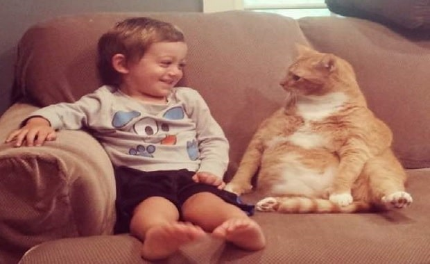 Once Unwanted Ginger Cat Becomes Guardian to Boy, His Human for Life!