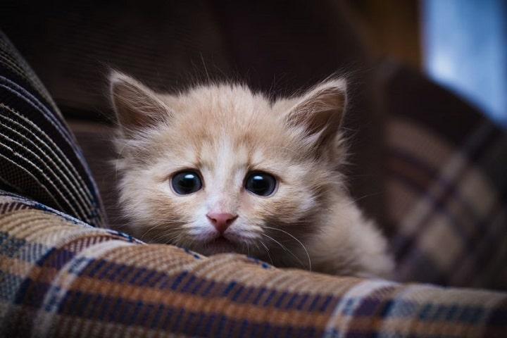 nervous kitten