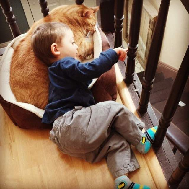Once Unwanted Ginger Cat Becomes Guardian to Boy, His Human for Life! 4