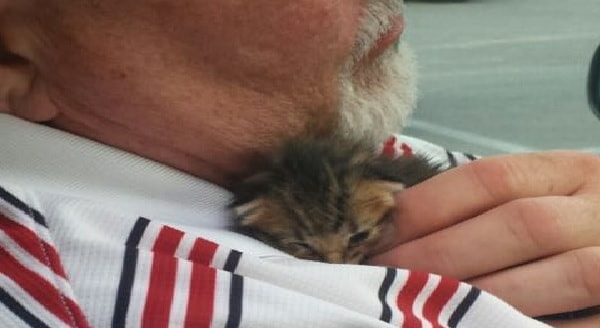 Man Rescues Kitten, Kitten Rescues Man. A Match Made in Heaven