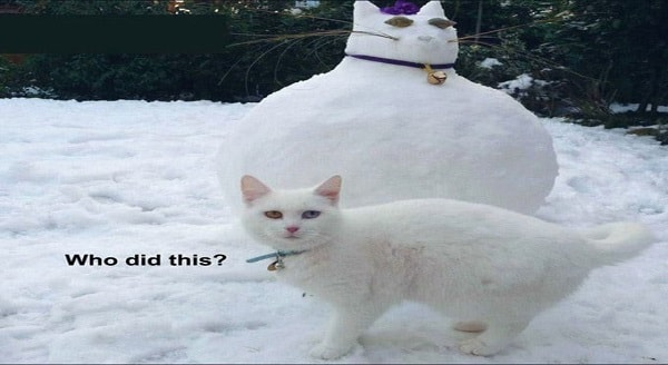 The Best Snow Cats on the Internet!!! (13 Photos)