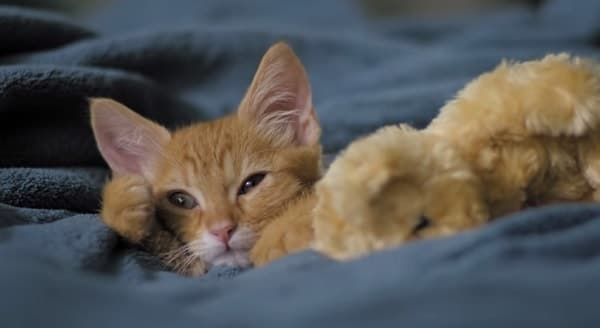 "New ""Dear Kitten"" Videos Just Released by Friskies and Buzzfeed"