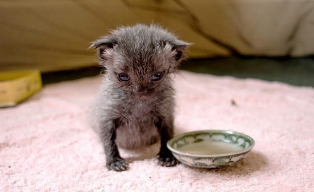 Orphaned Kitten Rescued After Downpour and Brought Back to Life