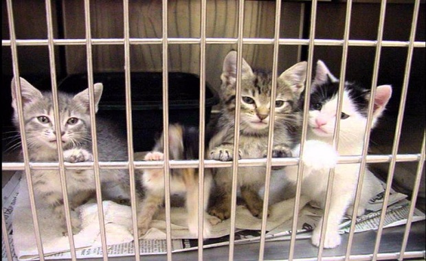 Woman Admits to Neglecting Pet Cats and Birds