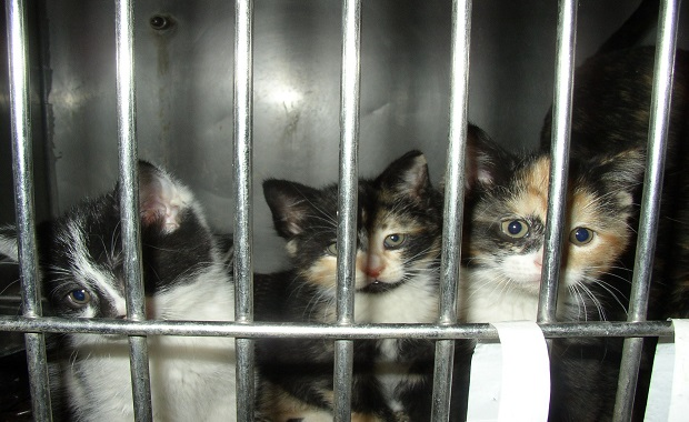 """Broward County Florida is Going """"No Kill"""". Here's How …"""