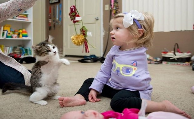 3-legged Kitten Adopted by 2-year-old Amputee, BFF'S! And Their Update!