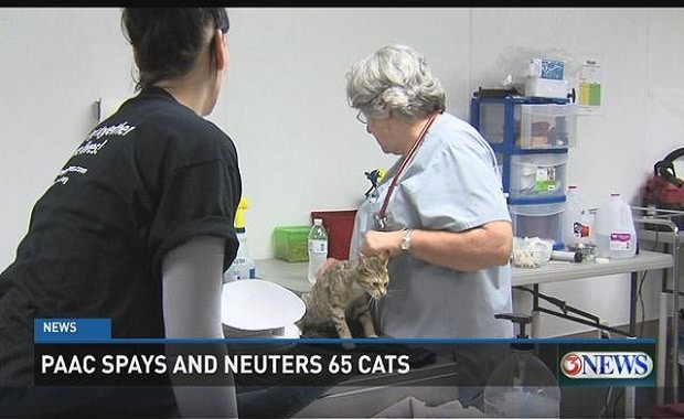 PAAC Spays and Neuters A Total of 65 Cats