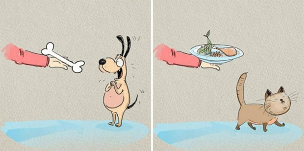 The Differences Between Cats and Dogs illustrated by Bird Born