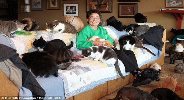 The Woman With 1,000 Cats: Gives Her Home to the Cats