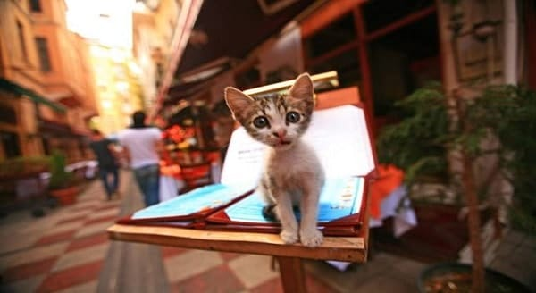 Stray Cats Living Like Kings and Queens in Istanbul, Turkey – VIDEO/13 PHOTOS