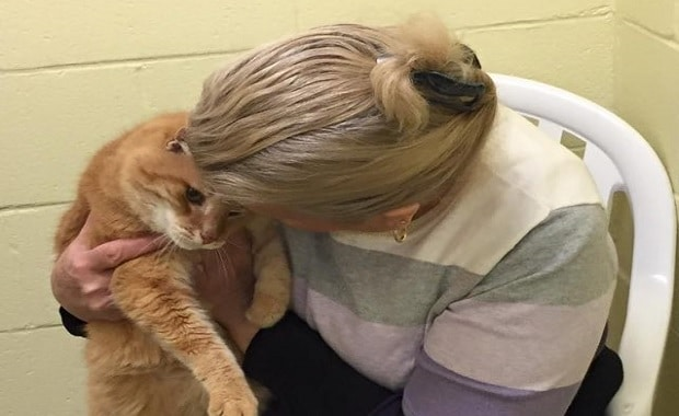 Woman Adopts Senior Cat, Goes Back to Shelter for His Friend