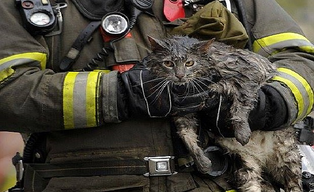 A Family, Two Cats, a House Fire. Great Story!
