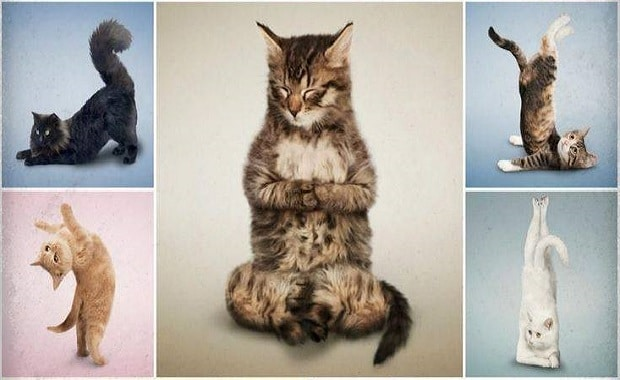 Yoga With Cats Connecting Shelter Cats to Forever Homes