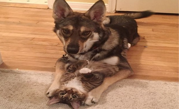 What Happens When You Let The Family Dog Raise the Family Kitten