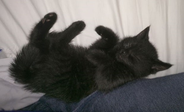 """Man """"Rescued"""" By One Very Special Black Kitten"""