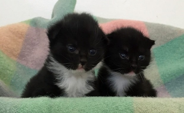 This pair of three-week-old kittens was dumped by the Hutt River in Avalon on the morning of January 7.