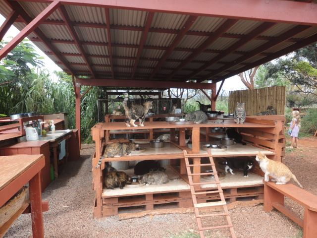 Open-air Cat Sanctuary Home to 370 Kitties in Hawaii 2