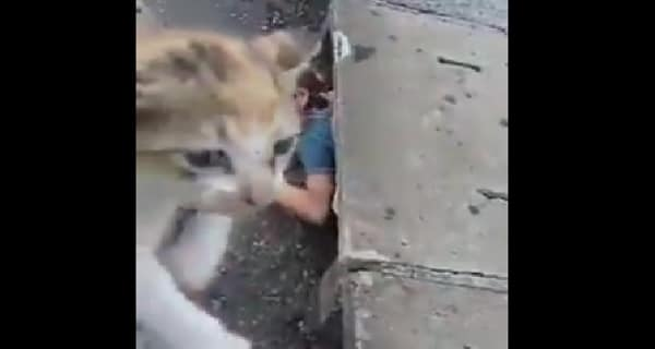 Nameless Young Woman Lowers Herself into Sewer to Save Trapped Kitten – VIDEO