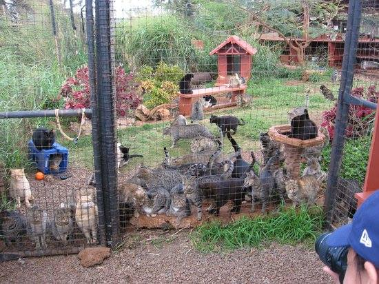 Open-air Cat Sanctuary Home to 370 Kitties in Hawaii 3