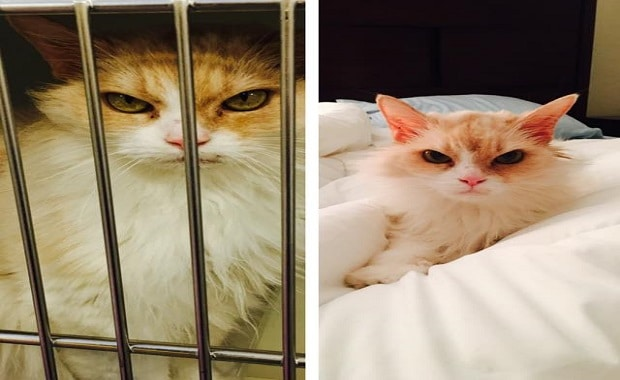 6 Year Old Sassy Lady Not Happy in Shelter and Then …