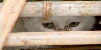 1,000's of Stolen Cats Jammed into Crates Are Rescued by Animal Activists in China