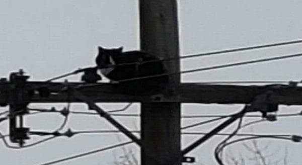 In Colorado, Cat Stuck Atop Power Pole For More Than a Week