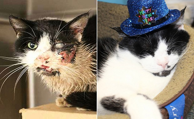 A Year After Being Buried Alive, Bart the Cat is Alive and Thriving, BUT …