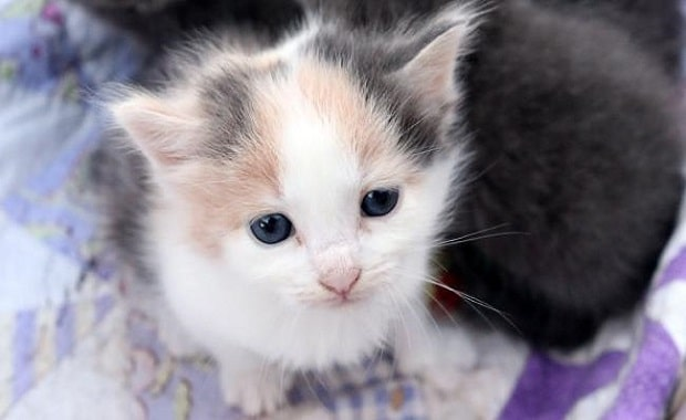 A Mama Cat Is Devastated When She Loses One of Her Kittens But Then…