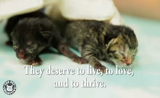Three Kittens Abandoned by Their Mom at Birth Get a Second Chance at Life – VIDEO