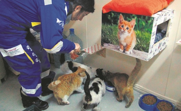 5-star Comfort for Feral Cats This Harsh Winter