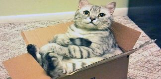 Why Do Cats Love Boxes? The Latest Theory