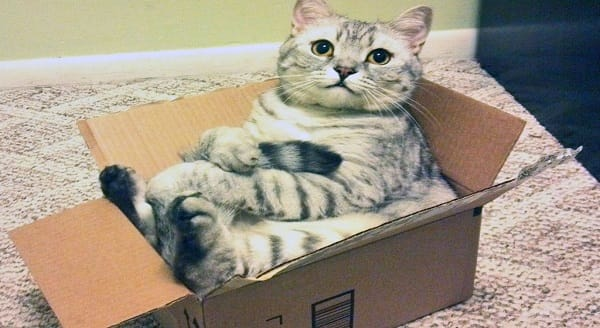 A reddit user's cat has taken box sitting to a whole new level. Credit: RissakaA reddit user's cat has taken box sitting to a whole new level. Credit: Rissaka