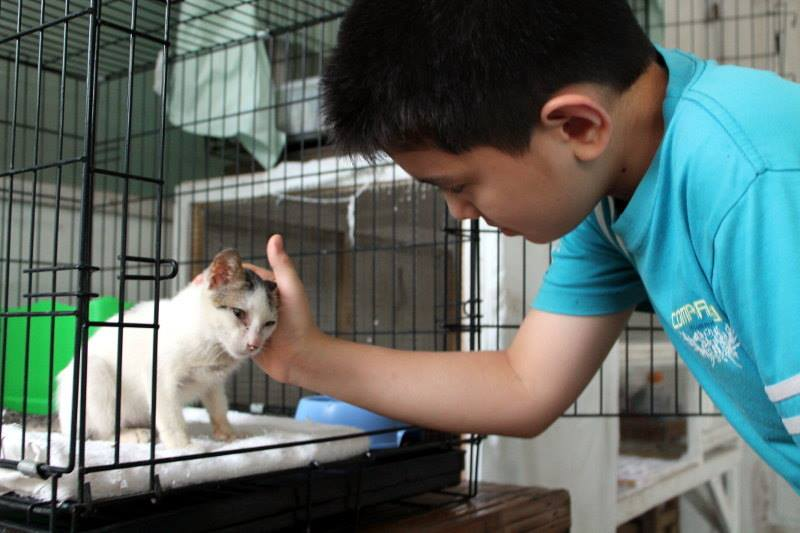 Boy In the Philippines Who Inspired the World By Starting An Animal Shelter ... Still Going Strong!