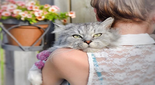 Some studies have linked the Toxoplasma parasite found in cats with psychotic disturbances in humans Corbis