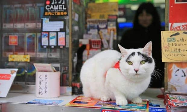 Hachi at the tobacconist north of Tokyo where she is attracting visitors. Photograph: Mainichi newspapers/Aflo