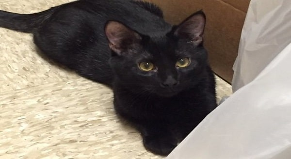 Texas Man Claims His Newly-Adopted Black Cat, Named Blake, Recently Saved His Life