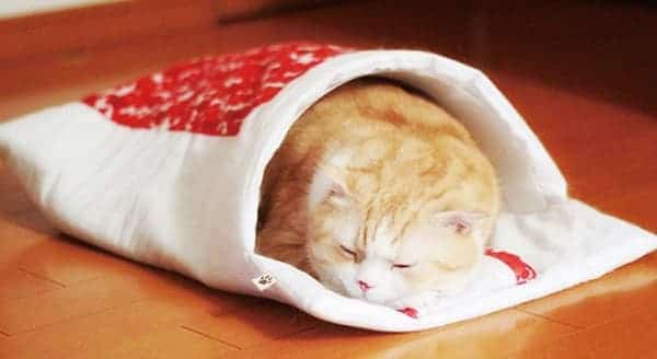 From Japan, Of Course … Futons … For Your Cat!