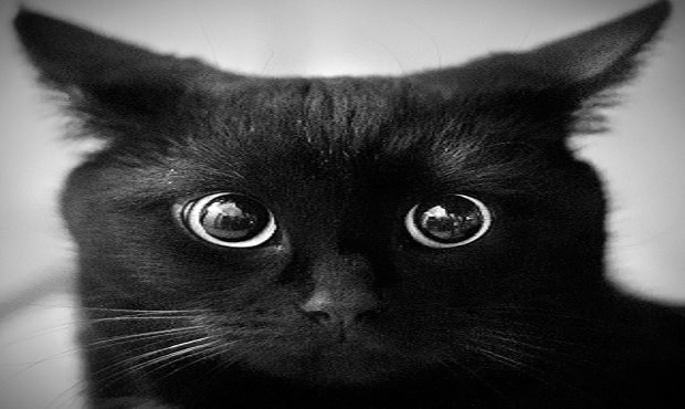 """More Black Cats and Dogs Than Ever Being Labeled """"Un-adoptable"""" and Being Euthanzied"""
