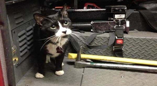 Resident FDNY Cat Has Passed On, Leaving His Mark on All Who Loved Him