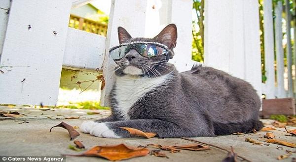 The Future's So Bright, Bagel The Cat's Gotta Wear Shades!