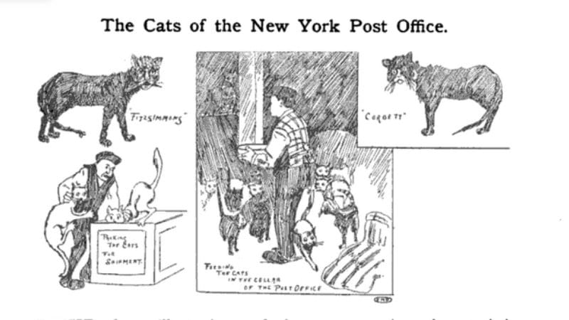 An artist's rendition of New York post office cats of the 1890s. (Public Domain/St. Martin's-le-grand)