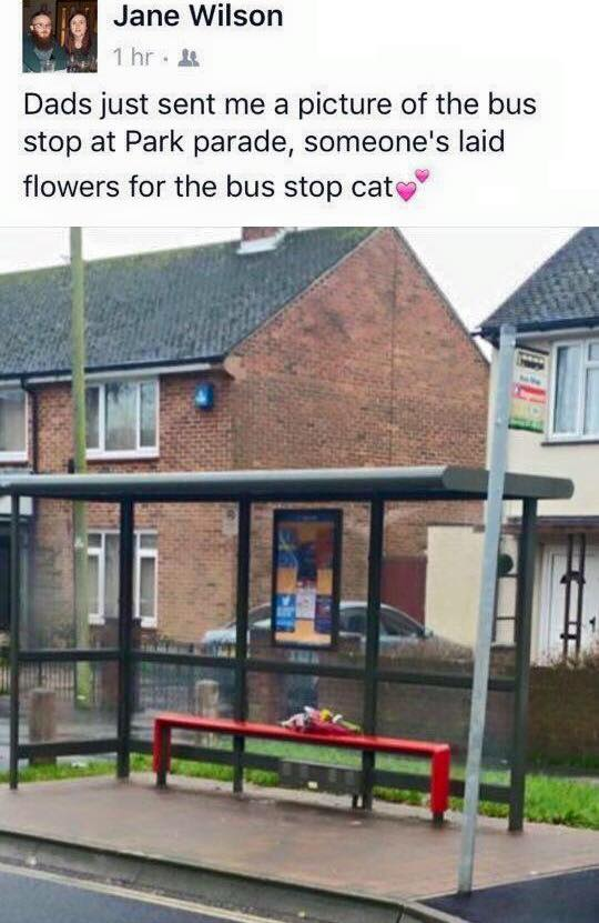 Flowers laid at the bus stop for Missy, the bus stop cat, who had to get put down due to individuals' fracturing her skull and jaw in Leigh Park.