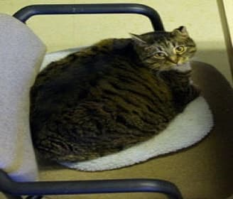 Fat Boy passed away in January, 2016. (Moose Jaw Humane Society)